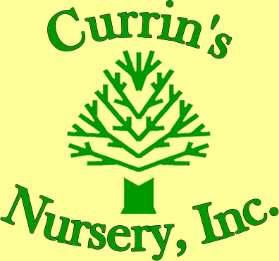 Currin's Nursery, Inc.
